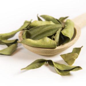 Kaffirlimetten-Blätter